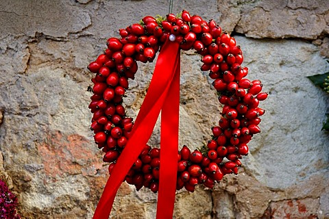 Wreath of Dog Rose (Rosa canina) hips with a red ribbon, Wachenroth, Middle Franconia, Bavaria, Germany, Europe