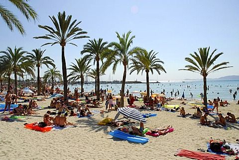 Holiday-makers at the Platja de Arenal, beach with palm trees, Mallorca, Balearic Islands, Mediterranean Sea, Spain, Europe