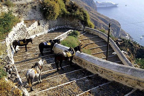 Donkeys and horses with a view in the caldera, stairway to the port of the capital Fira, Mesa Gialos, Santorini or Thira, Cyclades, Aegean Sea, Mediterranean Sea, Greece, Europe