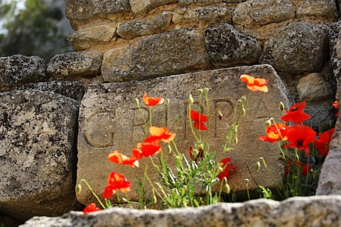 Poppy flowers in front of a stone tablet in the Temple Agrippa in Glanum, Plateau des Antiques, Saint Remy de Provence, Provence, France, Europe