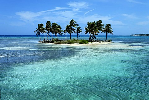 Small palm island in a lagoon, Turneffe Atoll, Belize, Central America, Caribbean