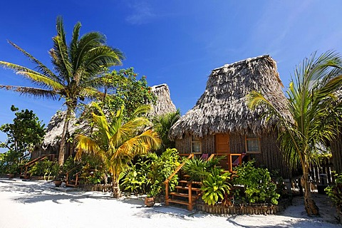 Thatched roof bungalows between palm trees in San Pedro, Ambergris Cay Island, Belize, Central America, Caribbean