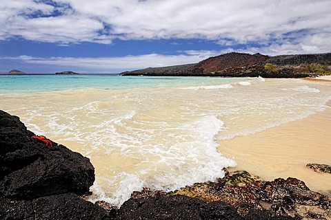 Beach with small waves, Red Rock Crab (Grapsus grapsus) and an island on the horizon, Punta Cormorant, Floreana Island, Galapagos Archipelago, Ecuador, South America, Pacific Ocean