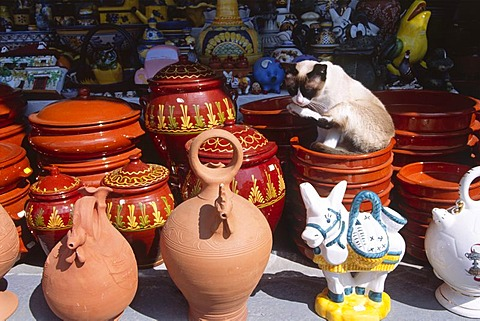 Cat sitting in a ceramic bowl and cleaning itself, Guadix, Andalusia, Spain, Europe