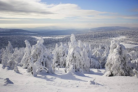 Snow-covered trees on the Brocken mountain, Harz, Saxony-Anhalt, Germany