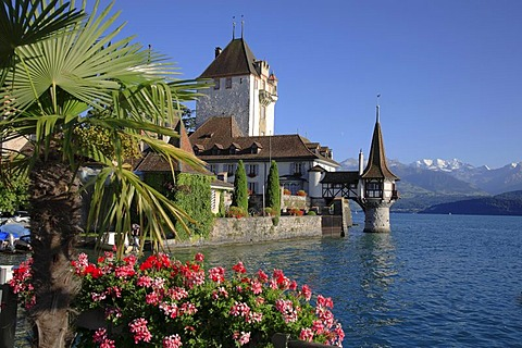 Castle of Oberhofen, Lake Thun, Thun, canton of Berne, Switzerland, Europe