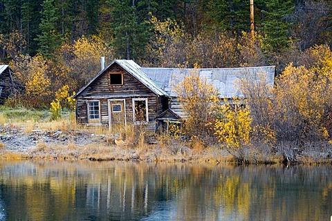 Historic log cabin, Klondike Gold Rush, Nares Lake, Lake Benett, fall colors, Carcross, Yukon Territory, Canada, North America
