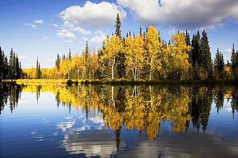 Fairbanks in autumn, Alaska, USA, North America