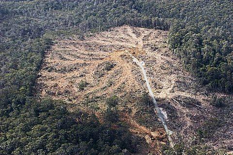 Wood clearing, aerial picture, Tasmania, Australia