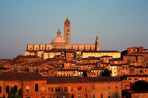 Evening light on Siena Cathedral, Siena, Tuscany, Italy