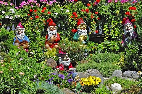 Garden gnomes in a Bavarian garden near Munich, Germany, Europe