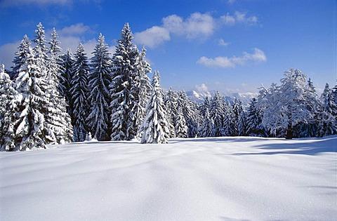 Snow-covered landscape, Kalkalpen National Park, Upper Austria, Austria, Europe