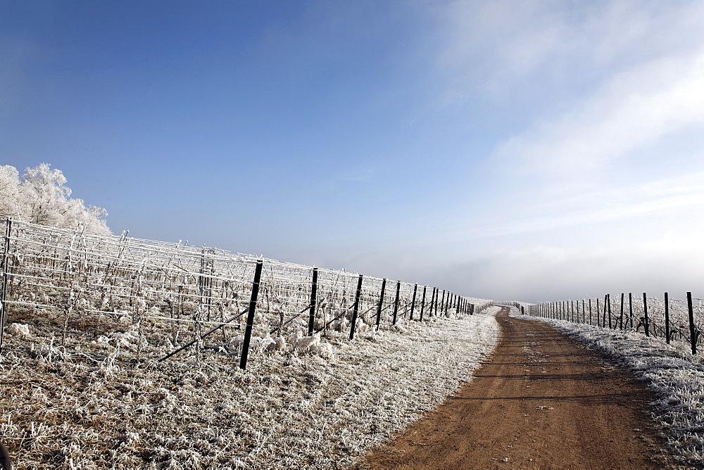 Frost-covered landscape, Palatinate region, Rhineland-Palatinate, Germany