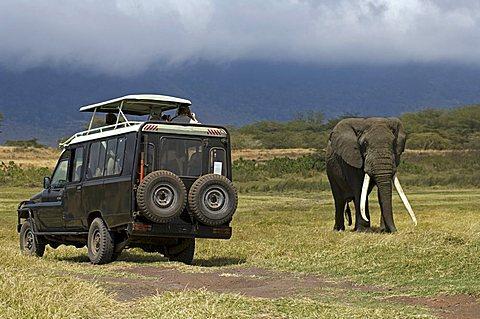 Jeep, African Bush Elephant (Loxodonta africana), Ngorongoro Crater, Tanzania, Africa - 832-27636