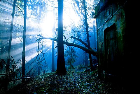 Early in the morning in a misty forest