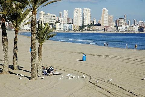 Tourist reading on the beach, Playa de Poniente, Benidorm, Costa Blanca, Spain