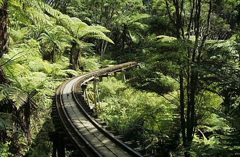 Fern trees and a trestle bridge of the Driving Creek Railway a narrow gauge railway leading through a rainforest Coromandel peninsula New Zealand