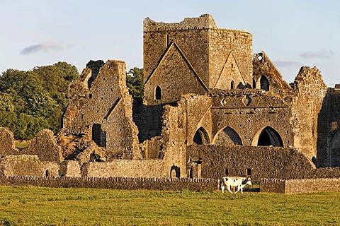 Hore Abbey, Cashel, Tipperary, Ireland