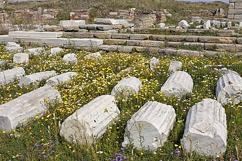 In spring the archaeological site is covered with colorful flowers, Delos, Greece