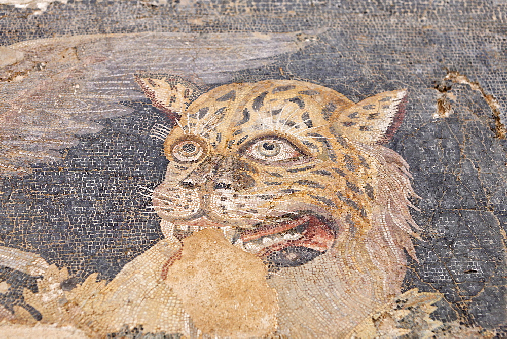 Mosaic showing head of panther in Museum, Delos, Greece