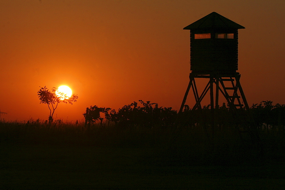 Sunrise, hunting hide among grape-vines Burgenland, Austria