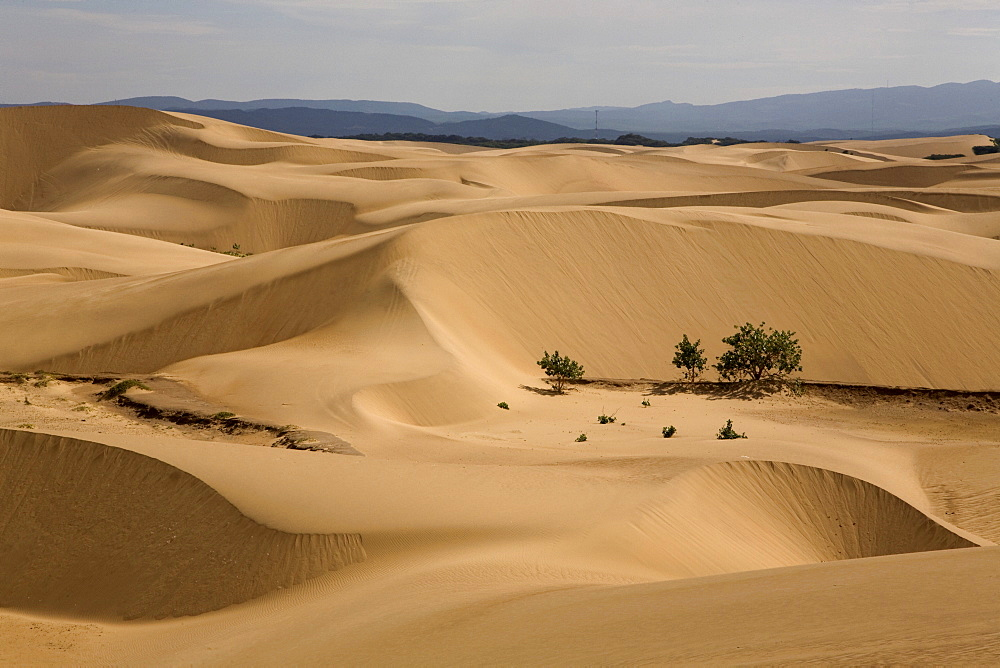 Desert sands, Paraguana Peninsula, Falcon, Venezuela, South America