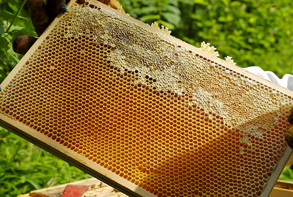 Honeycomb partially sealed with wax