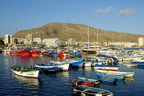 Fishing boats in harbour, Los Cristianos, Tenerife, Canary Islands, Spain