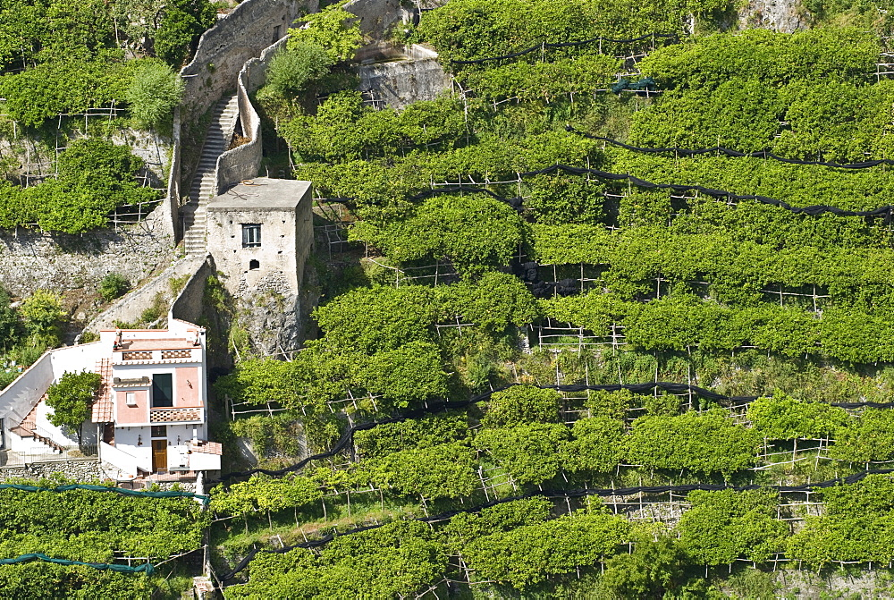 Houses and steep vineyard, Atrani, Amalfi Coast, Campania, South Italy, Europe