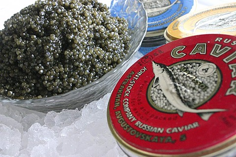 Russian caviar served on ice