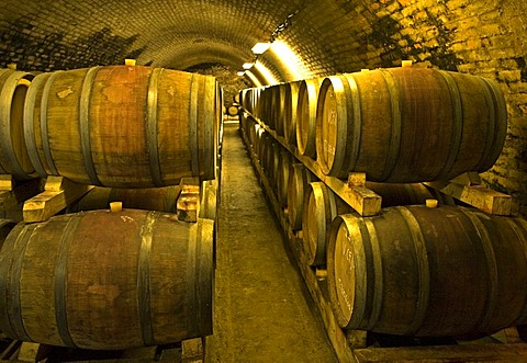 Wine-cellar of Villany, , Pecs, Southungary, Ungary, Southeast Europe, Europe,