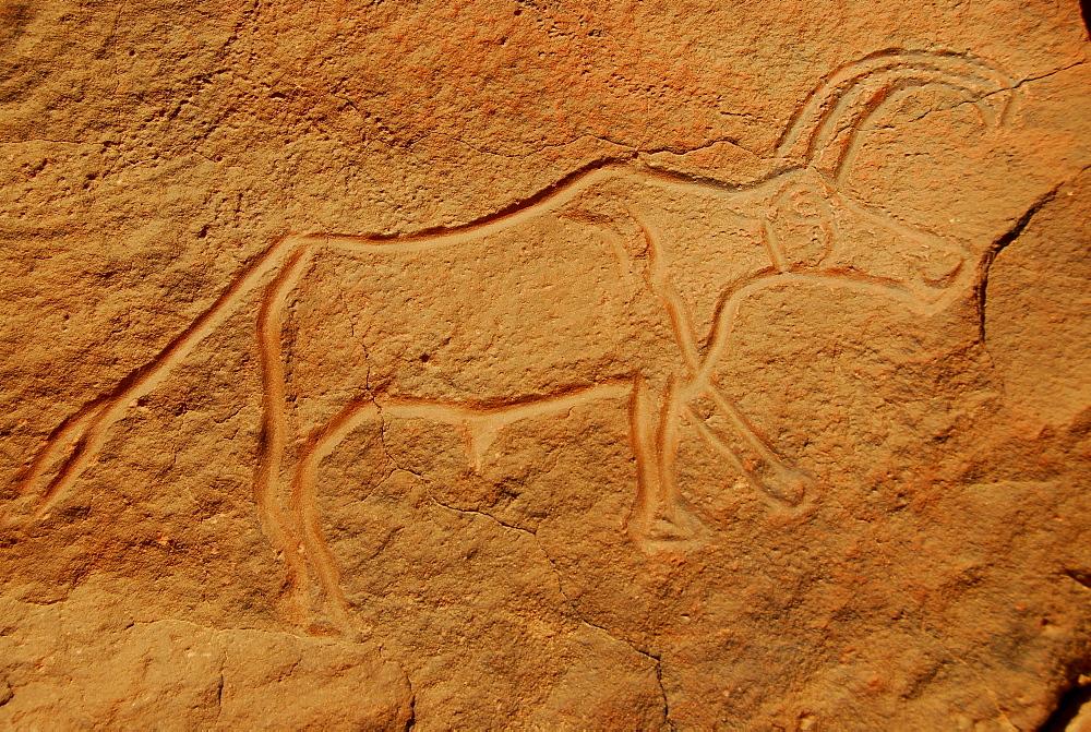 Rock engraving of an ox, Wadi Mathendusch, Libya