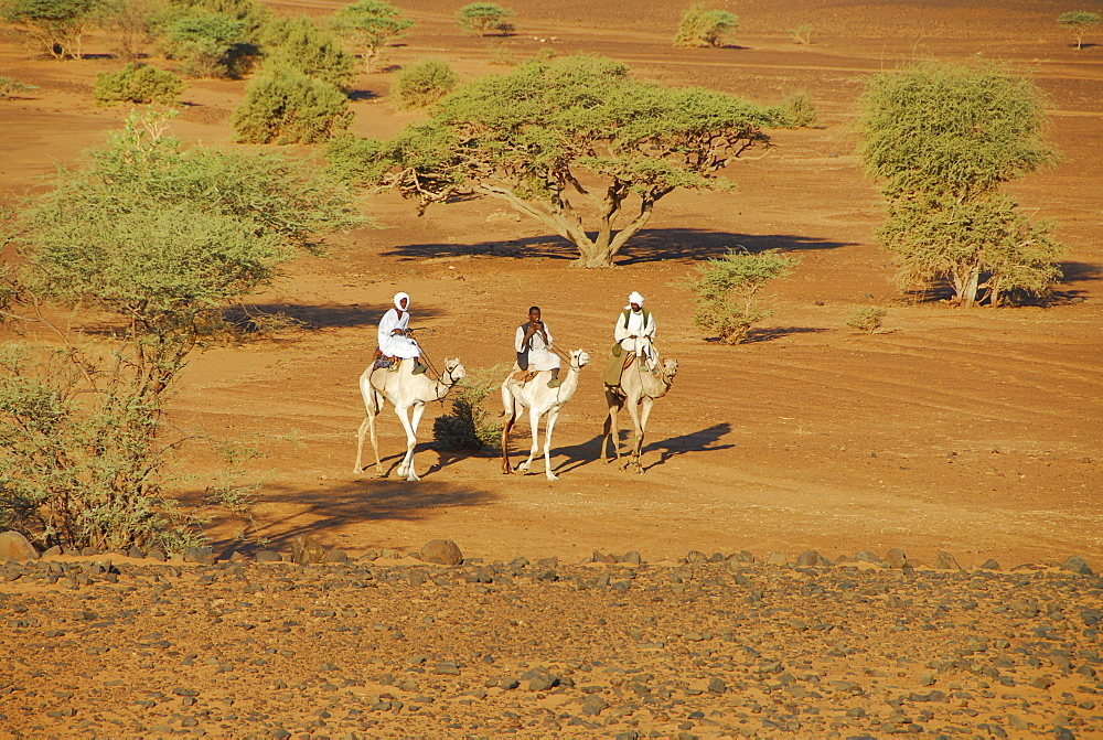 Nomads riding camels, Meroe, Sudan, Africa
