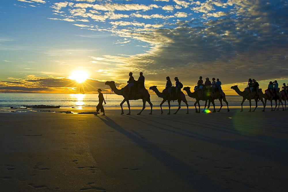 Camel caravan, dromedaries, tourist camel ride on Cable Beach, Broome, Western Australia