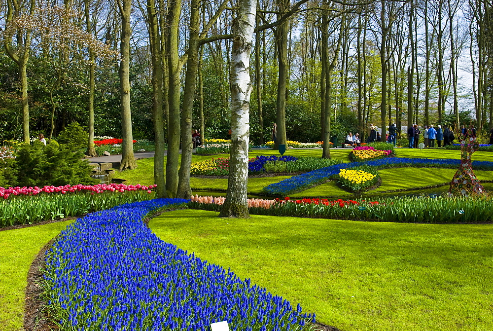 Flower garden with Grape Hyacinths (Muscari armeniacum) and Tulips (Tulipa), Keukenhof, Holland, Niederlande, Europa