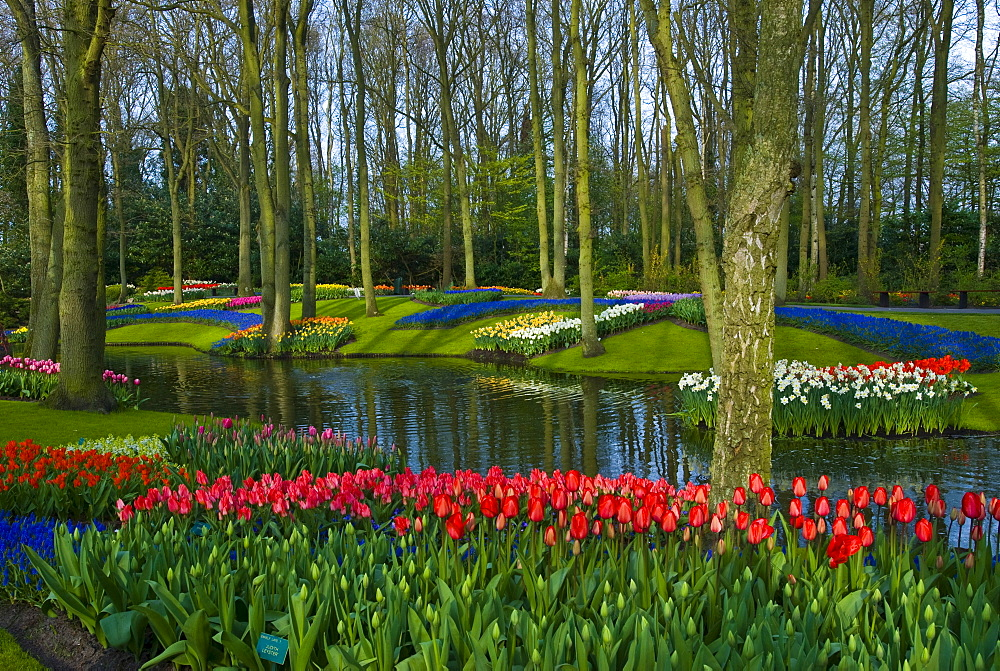 Keukenhof Gardens, Holland, the Netherlands, Europe