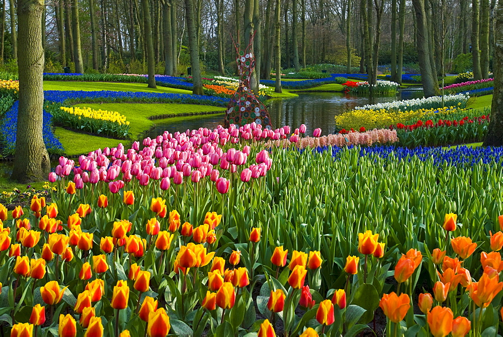 Tulips (Tulipa), Keukenhof Gardens, Holland, the Netherlands, Europe