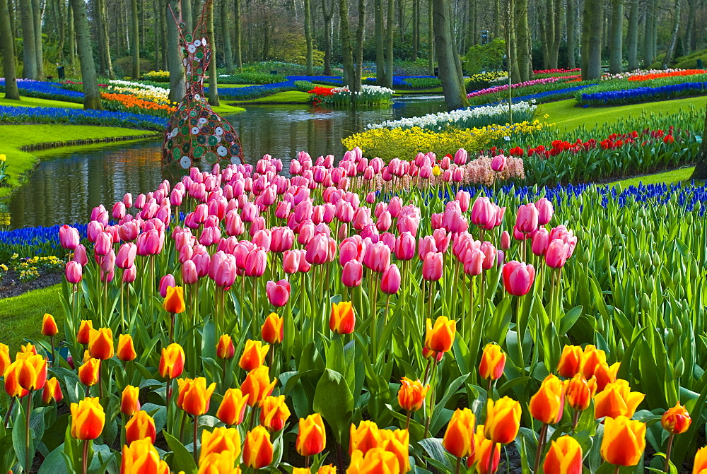Tulips (Tulipa), park, Keukenhof Gardens, Holland, the Netherlands, Europe