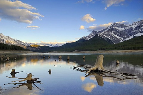 Tree trunks with exposed roots in the shallow waters of Spray Lakes, south of Canmore, Alberta, Canada
