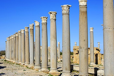 Ancient colonnade with corinth capitels, Roman ruins of Leptis Magna, Libya