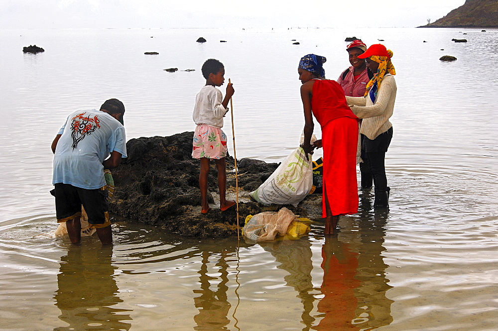 A group of local shell gatherers in the lagoon near Morne Brabant, Mauritius