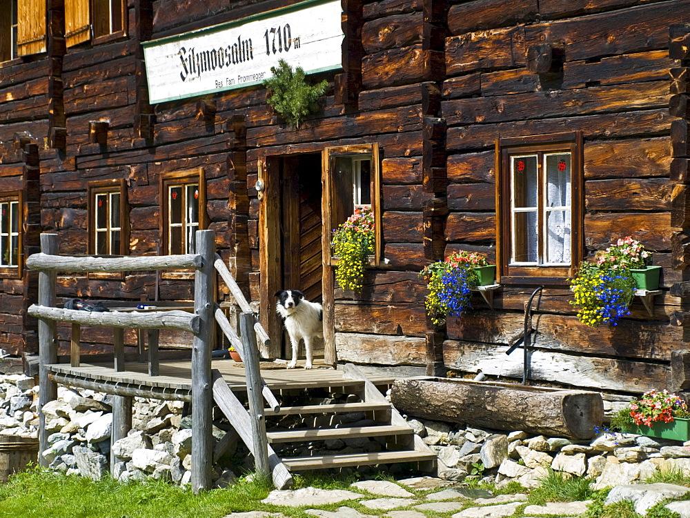 House, Filzmoosalm (Filzmoos mountain pasture), Grossarltal (Grossarl Valley), Salzburg, Austria, Europe