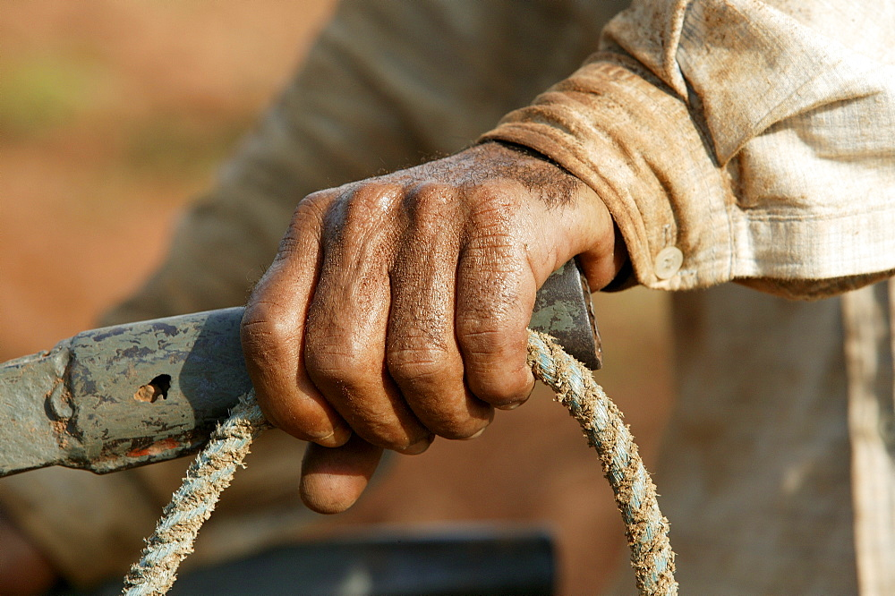 Field worker holding the plow and the reins, Paraguay, South America