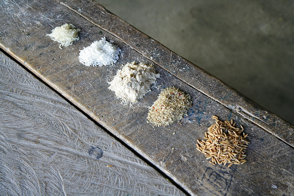 Grain varieties used in the production of pasta at a pasta factory in Demerara Province, Guyana, South America