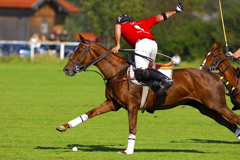 Polo player, Polo tournament, Berenberg High Goal Trophy 2007, Thann, Holzkirchen, Upper Bavaria, Bavaria, Germany