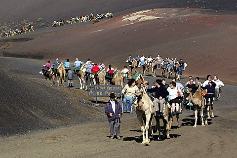 Camel riding, National Park Timanfaya, Lanzarote, Canary Islands, Spain