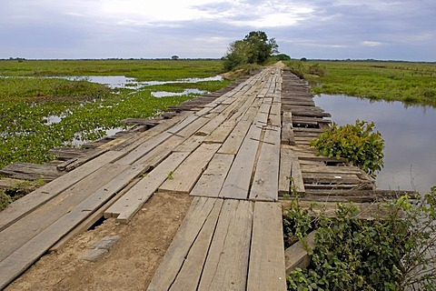 Typical brigde on transpantaneira road in Pantanal, Brasil