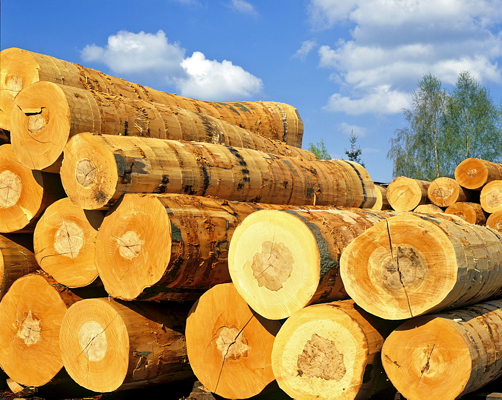 Stacked logs, lumber industry
