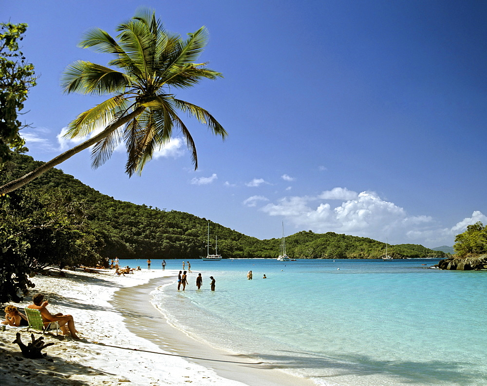 Palm tree, Trunk Bay, St. John's Island National Park, U.S. Virgin Islands, Caribbean