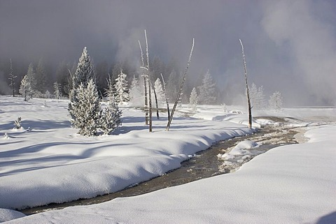Winter landscape in Yellostone national park USA